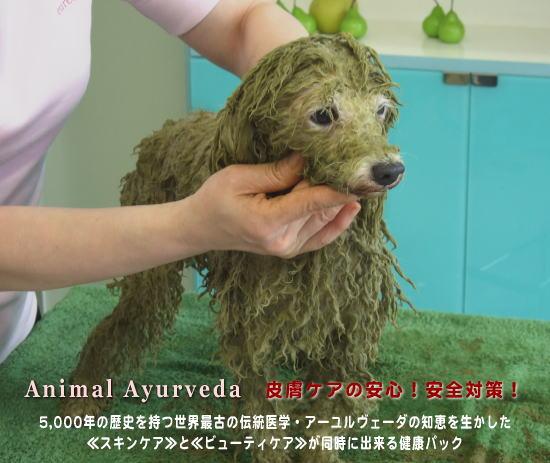 ハーブパックで皮膚ケア。いつも健康でいて欲しいペットにユーリカのアニマルアーユルヴェーダ。